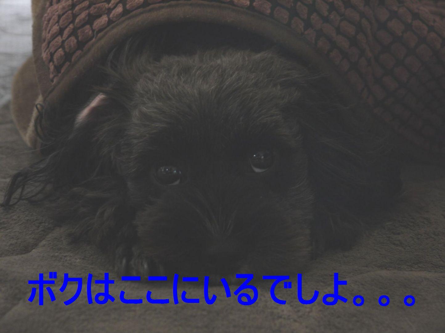 P1200053_a_2